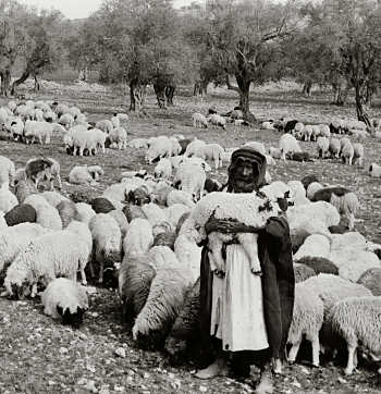 Lost: A Sheep, A Coin, & 2 Sons – Part 1